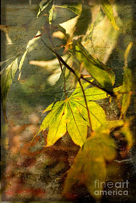 Photograph - Fall by Liz  Alderdice