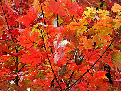 Photograph - Fall Maple Leaves 2 by Duane McCullough