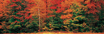 Fall Colors Photograph - Fall Maple Trees by Panoramic Images