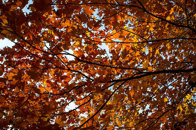 Art Print featuring the photograph Fall Maples - 02 by Wayne Meyer