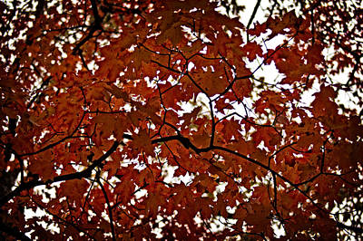 Art Print featuring the photograph Fall Maples - 04 by Wayne Meyer