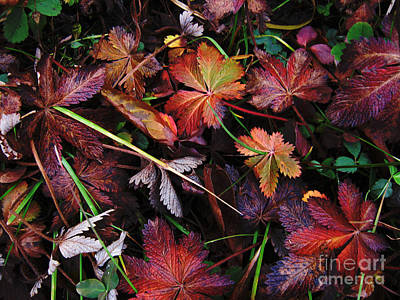 Art Print featuring the photograph Fall Mix by Janice Westerberg