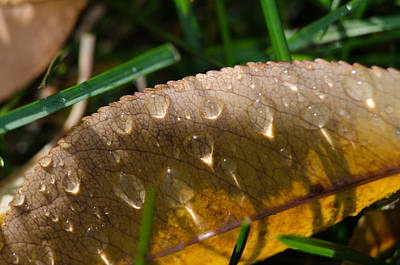 Photograph - Fall Morning Leaf And Dew by Jim Shackett