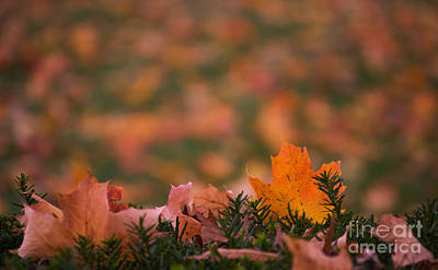 Photograph - Fall Mosaic 2 by Rima Biswas