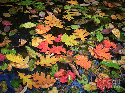 Photograph - Fall Mosaic by Marianne Jensen