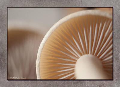 Photograph - Fall Mushroom 11 by WB Johnston