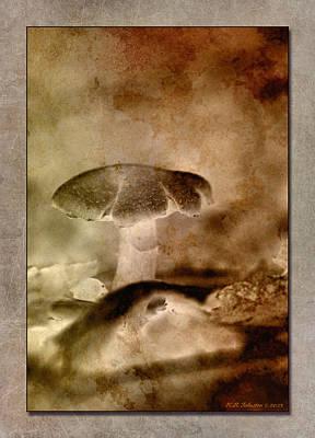 Photograph - Fall Mushroom 12 by WB Johnston