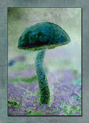 Photograph - Fall Mushroom 19 by WB Johnston