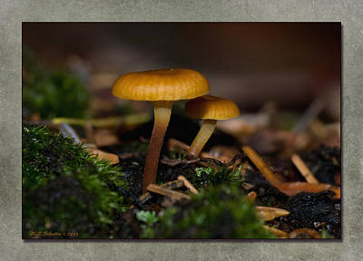 Photograph - Fall Mushroom 6 by WB Johnston