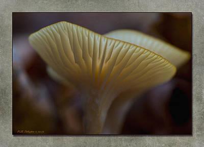 Photograph - Fall Mushroom 7 by WB Johnston