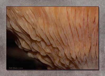 Photograph - Fall Mushroom 9 by WB Johnston