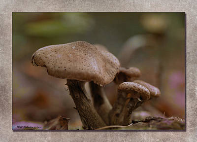 Photograph - Fall Mushrooms by WB Johnston