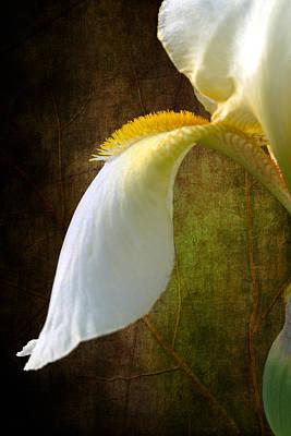 Fall Of Iris Art Print by Randy Wood