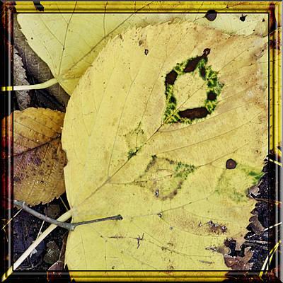 Vine Photograph - Fall Of The Tattoo by LeeAnn McLaneGoetz McLaneGoetzStudioLLCcom