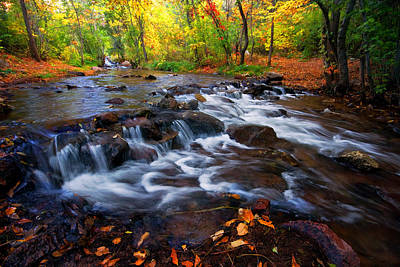 Art Print featuring the photograph Fall On Fountain Creek by Ronda Kimbrow