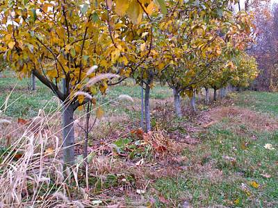 State Love Nancy Ingersoll - Fall Orchard by Toni Ryder