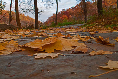 Photograph - Fall Pathway by Michael Porchik