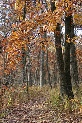 Fall Pathway Overhang Art Print