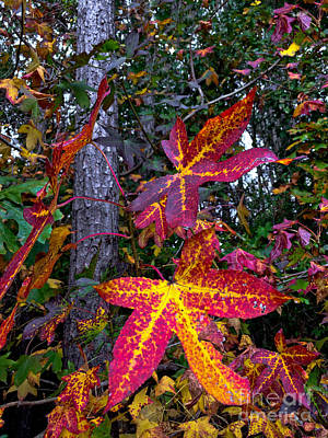 Photograph - Fall Patina by Dale Powell