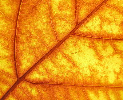 Photograph - Fall Pattern by Derek Dean