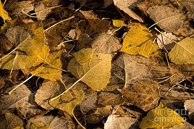 Photograph - Fall by Peggy Hughes