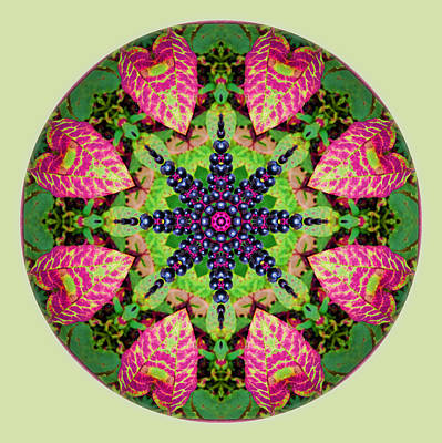 Photograph - Fall Pokeweed Mandala by Beth Sawickie