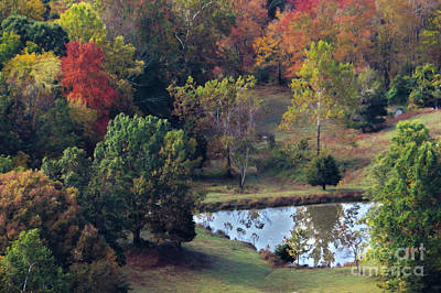 Photograph - Fall Pond by Dawn Gari