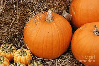 Digital Art - Fall Pumpkins by Eva Kaufman