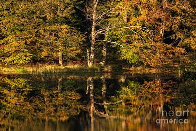 Photograph - Fall Reflected by Inge Riis McDonald