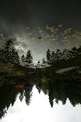Fir Trees Digital Art - Fall Reflection by Jeff Burgess