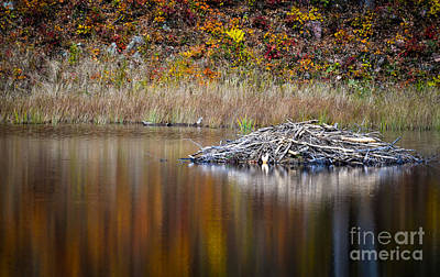 Photograph - Fall Reflections by Bianca Nadeau