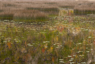 Photograph - Fall Reflections In The Tarn Acadia Np Maine by Greg Kluempers