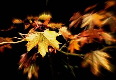 Fall Rush Print by Anne McDonald