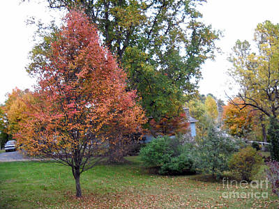West Virginia Photograph - Fall Service Tree by Timothy Connard
