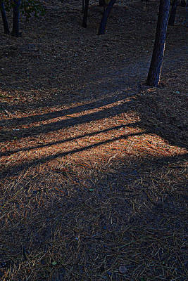 Photograph - Fall Shadows by Randal Bruck