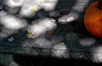 Photograph - Fall Shadows by Sue McGlothlin