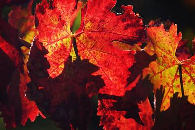 Photograph - Fall Show by Michael Courtney