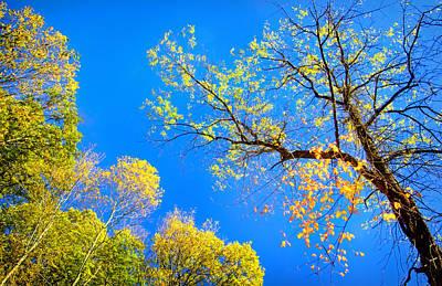 Photograph - Fall Sky View by Carolyn Derstine