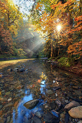 Photograph - Fall Sparkle by Pamela Winders