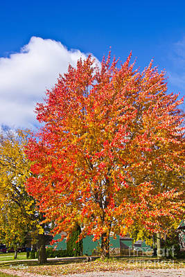 Photograph - Fall Spectacular In Orange by Bill Woodstock