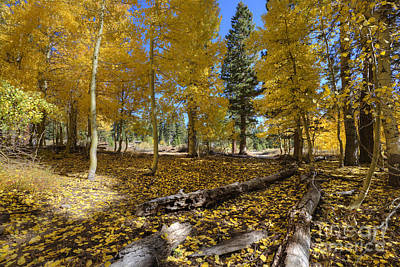 Going Green - Fall Splendor by Dianne Phelps