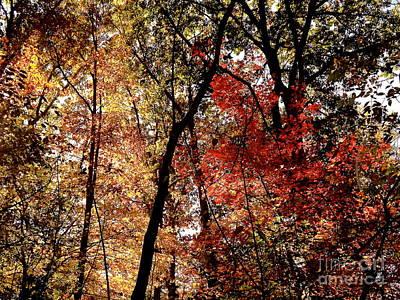 Photograph - Fall Splendor by John Potts