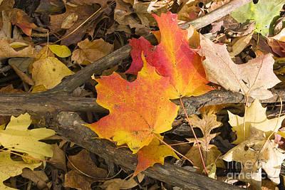 Photograph - Fall by Steven Ralser