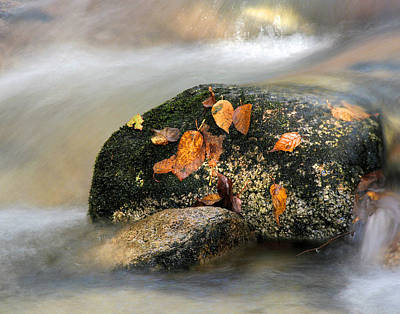 Photograph - Fall Stream by Acadia Photography