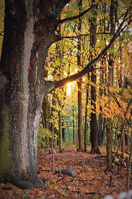 Fall Sunset Art Print by Jennifer  King