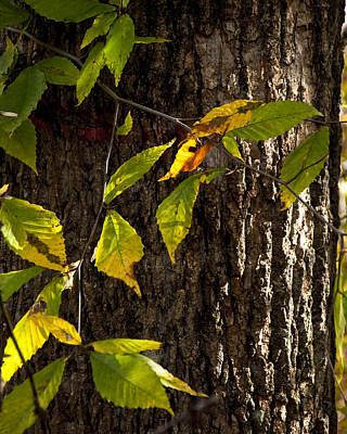 Photograph - Fall Textures by Craig T Burgwardt