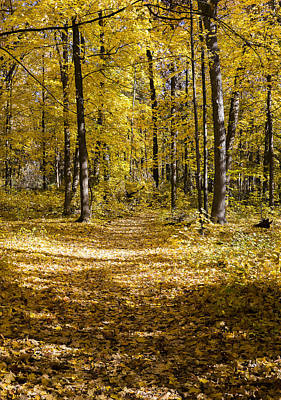 Photograph - Fall Trail - Arboretum - Madison - Wisconsin by Steven Ralser