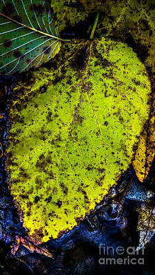 Photograph - Fall Treasure At A Stream by Michael Arend