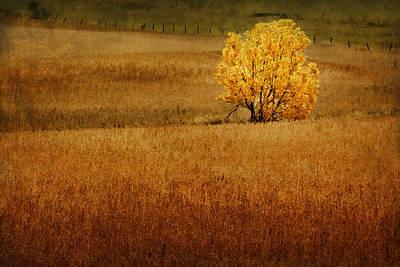 Photograph - Fall Tree And Field #1 by Nikolyn McDonald