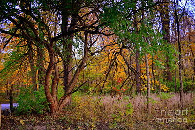 Indiana Photograph - Fall Tree By The Bridge by Amy Lucid